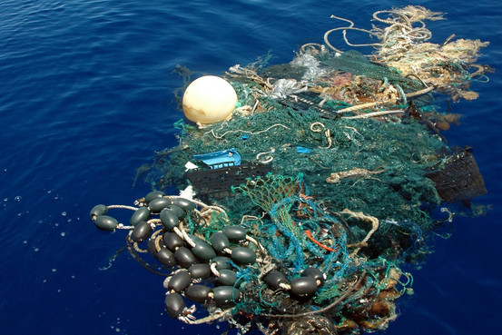 Floating fishing gear represents a deadly trap to many marine species