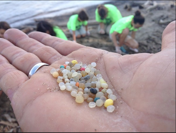 Pre-production plastic pellets from the beaches of Lake Eyrie