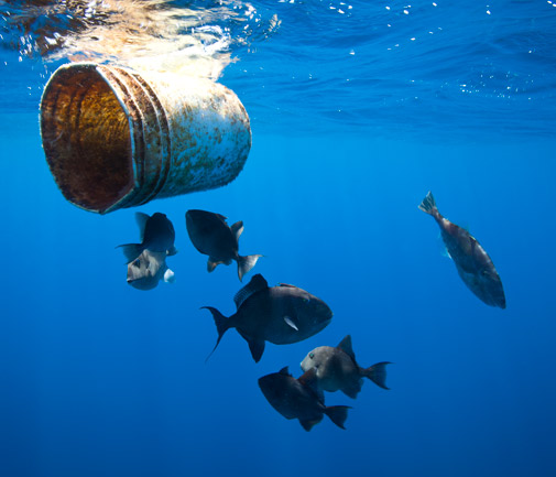 Even in deep water, far from civilisation, plastic waste is pervasive